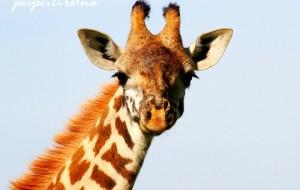 【肯尼亚图片】爱非洲~~爱在肯尼亚之旅