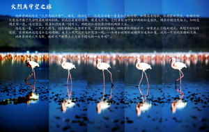 【乞力马扎罗图片】【火烈鸟之旅】 & 【乞力马扎罗的雪(登山攻略)】