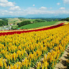 北海道攻略图片