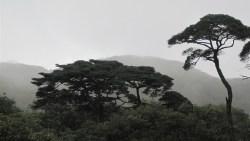 桂林景点-猫儿山森林公园