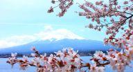 如何去富士山,东京到富士山要多久