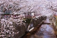 秒速五厘米—2017年4月东京樱花祭