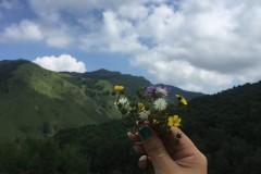 投进万亩草甸千里花海的怀抱--北京东灵山游记