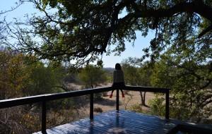 【克鲁格国家公园图片】有个国家叫南非,有个公园叫克鲁格。三天,约翰内斯堡到克鲁格的自驾旅行