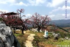 河源:连平赏桃花+和平热龙温泉