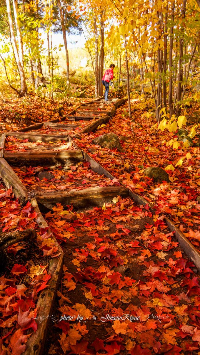 瀑布等重要城市和名胜古迹。 每当秋天来临, 这里就会被枫叶的色彩渲染的无比绚丽无比灿烂, 天地之间成为了真正的锦绣河山。 十月金秋, 我们来得正是时候, 从枫叶大道一路走来, 红枫处处,景致非凡, 紫红的、深红的、火红的、橘黄的、明黄的、深绿的、浅绿的枫叶层层叠叠交织在一起, 和湖光山色交相辉映,气势非凡, 美不胜收,人间天堂! 现在,就请大家随着Sunnie家镜头中的万种枫情, 一起穿越800公里的枫叶大道吧