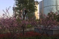 2017清明节杭州——嘉兴四日游