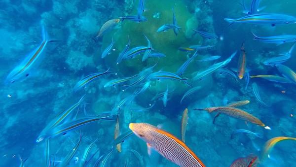 壁纸 海底 海底世界 海洋馆 水族馆 桌面 600_339