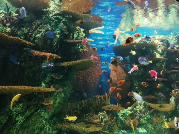 壁纸 海底 海底世界 海洋馆 水族馆 游戏截图 600_450