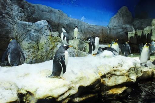 壁纸 海底 海底世界 海洋馆 水族馆 510_340