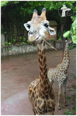 顺德到广州动物公园