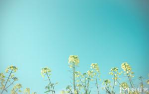 【兴化图片】四月去哪儿?看油菜花啊!——2017年清明自驾江苏兴化随记
