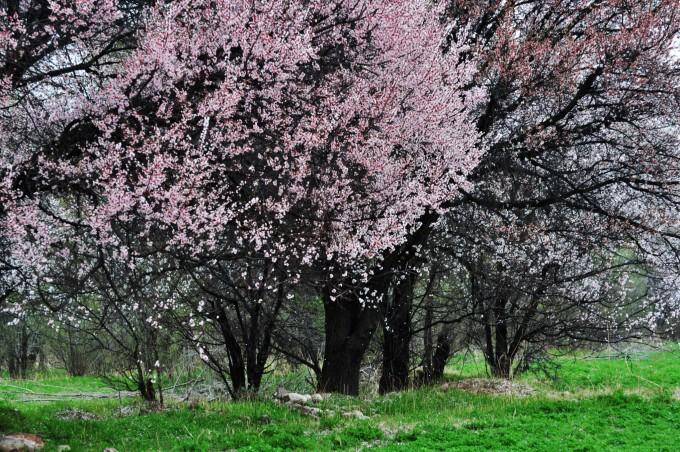 多图记三次新疆行,坐看云起,观花赏叶,骋马放歌(完结)图片
