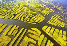 4.7-9号 兴化油菜花 李中水上森林 扬州瘦西湖 何园