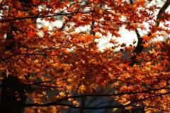 【赏枫】秋日私语——日本本州六日深秋赏枫之旅