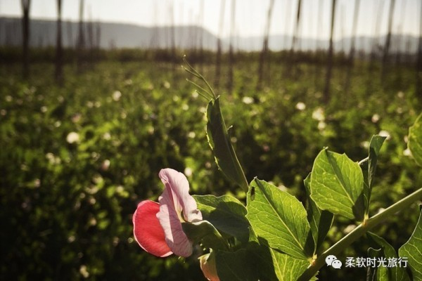 抚仙湖春夏秋冬各季节攻略玩法(2017年12月更