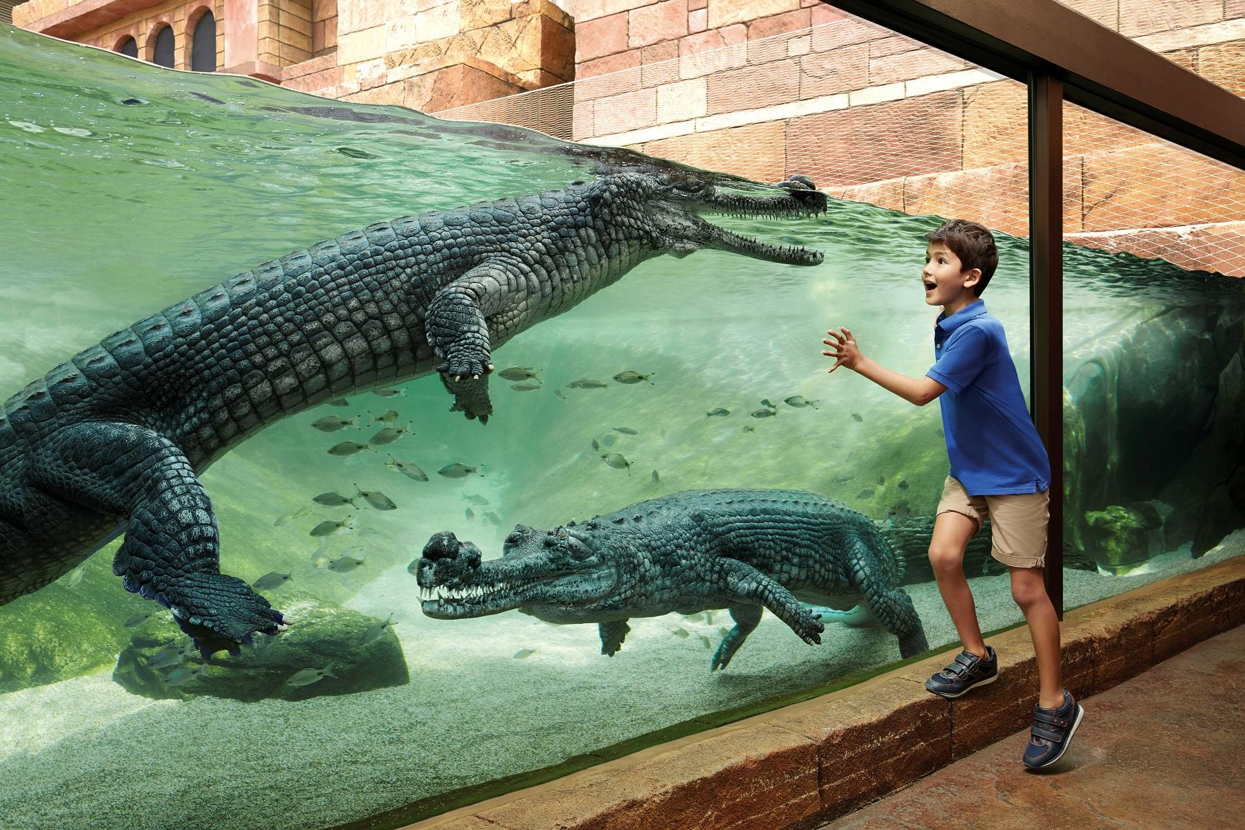 新加坡 三大动物园专车接送(亲子中文专车 日间/河川