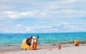 【可可西里图片】不去海岛,不玩欧美,另类蜜月游——我们的青藏行
