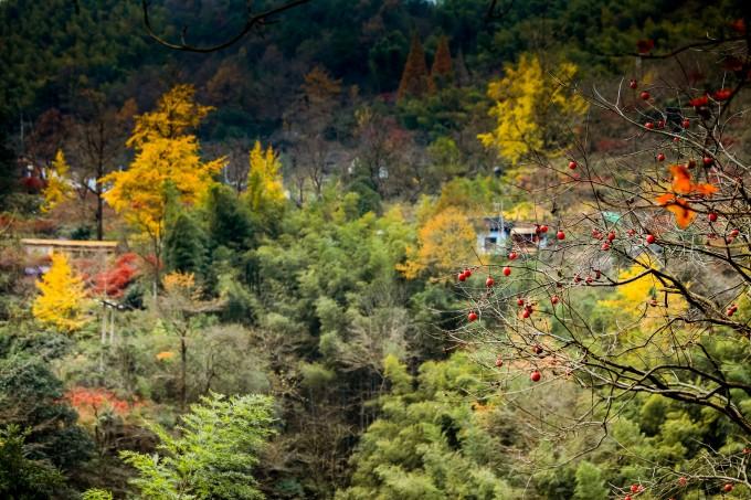 丹山赤水风景区