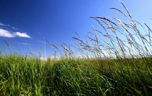 【山丹图片】风在山脚盘旋,卷起狗尾草,一簇一簇,泛起记忆的味道――山丹军马场之行