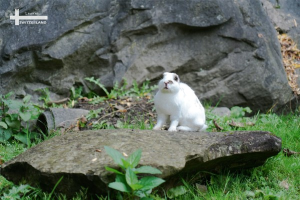 这兔子好肥啊   ▲人造《冰川机》   这就是我期待的中世纪古城,一种