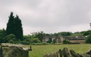 英国娱乐-梅菲尔德羊驼馆