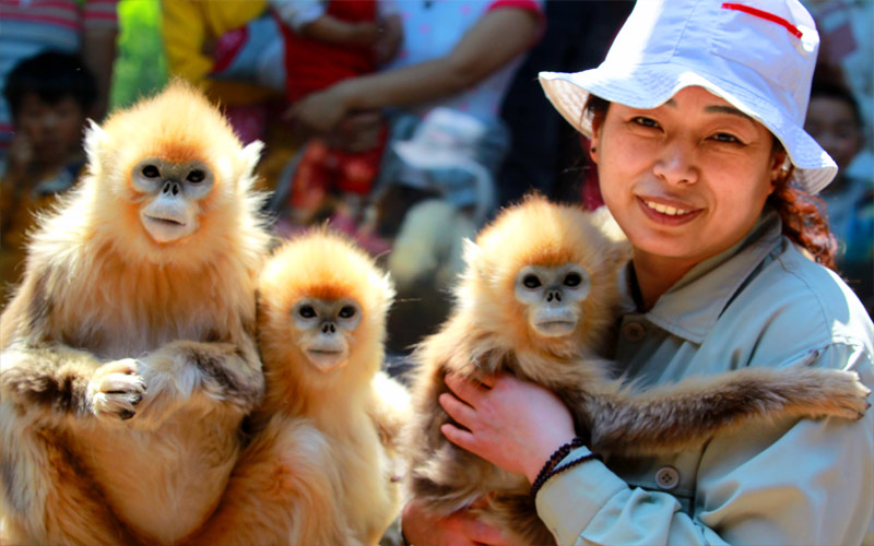 济南动物园景区门票 电子票 极速入园(积淀了深厚的金牛文化和形象