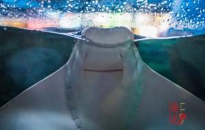 【珠海横琴长隆国际海洋度假区图片】珠海长隆亲子游——关于海洋的景与味