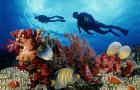 十一轻松GO · 芽庄 黑岛浮潜深潜一日游(中英文教练+高级潜水装备+珊瑚保护区潜水+午餐和饮料)