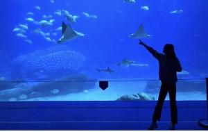 【珠海横琴长隆国际海洋度假区图片】睁开眼是深海梦境,抬起头是星辰烟花 。   ——记珠海长隆海洋王国梦幻之旅