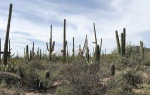 【菲尼克斯图片】末日仙人掌:巨人柱国家公园一览Saguaro National Park