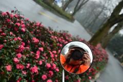杭州冬天的茶花