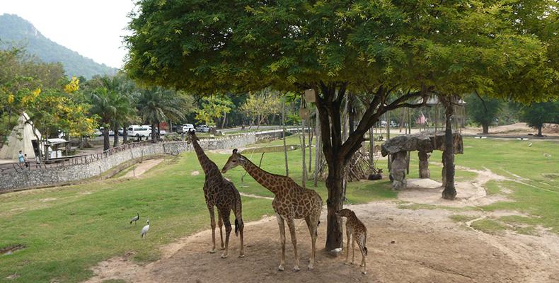 展示区,即各种野生动物的活动区,每种动物的牢笼是最接近自然的.