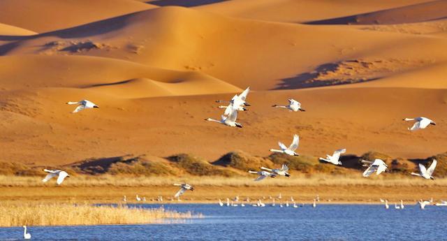 端午3日 腾格里沙漠 远征腾格里-五湖连穿