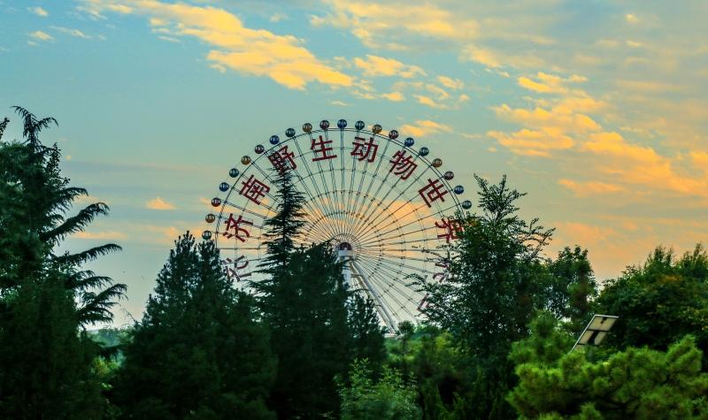 山东济南旅游 泰安往返-济南野生动物园一日游(亲子出游 置身森林氧吧