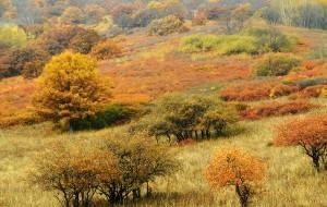 【木兰围场图片】秋日的风吹出来五彩的草原