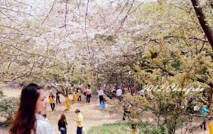 【长沙图片】四月醉芳菲【2012长沙】