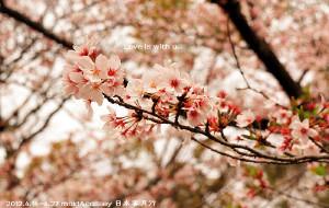 【北海道图片】【LOVE IS WITH U】14天日本蜜月自由行(14天游记记录完成)
