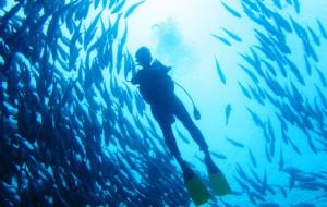 【诗巴丹图片】#MM独自上路#碧海蓝天——鲨鱼、海狼风暴、JACK风暴,隆头鹦哥、海龟共舞