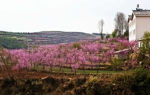 昆明娱乐-红土地油菜花摄影农家园