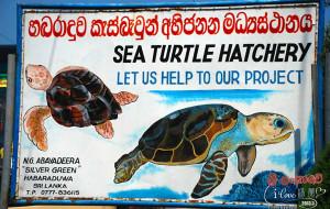 斯里兰卡娱乐-龟养殖场和孵化场