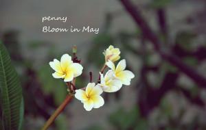 【柬埔寨图片】Bloom in May 柬埔寨的时光