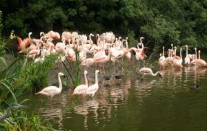 爱尔兰娱乐-都柏林动物园