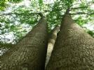杭州绿荷塘古楠木森林公园