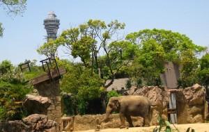 大阪娱乐-天王寺动物园