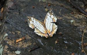 【乳源图片】广东大峡谷&南岭国家森林公园(国语版),景点线路联游,注意事项版