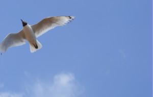 【神木图片】宁静的夏天,我们去神湖
