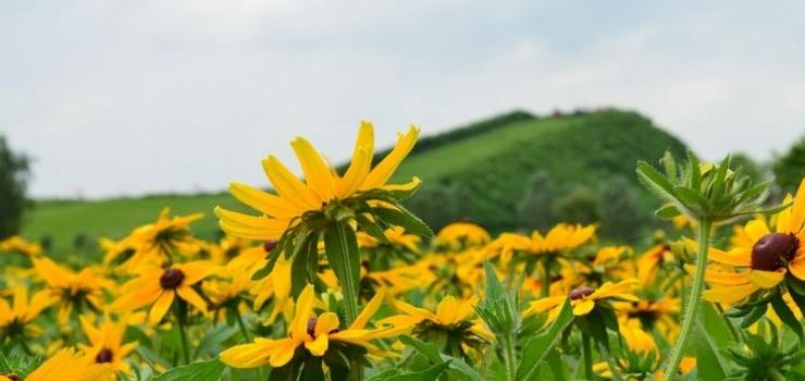 北戴河集发生态农业示范观光园