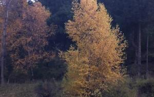 【互助图片】10月6日,星期六,北山