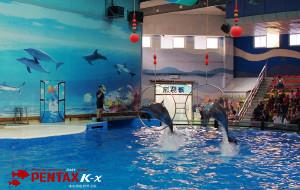 南京娱乐-南京海底世界